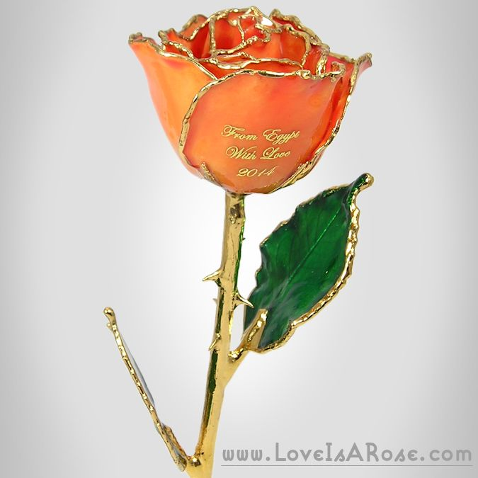 Gold Trimmed Peach Rose