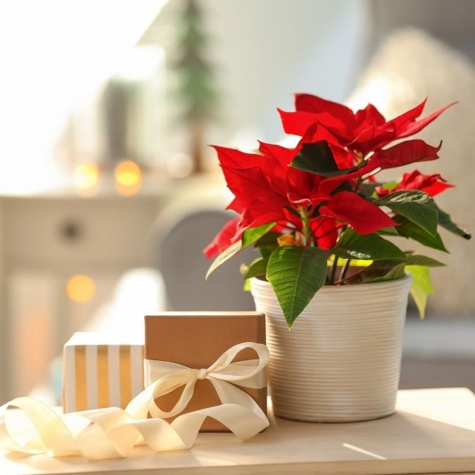 Romantic Christmas Gifts To Give This Year
