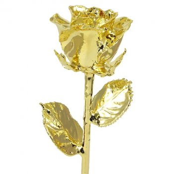 11 24k Gold Dipped Rose Love Is A Rose